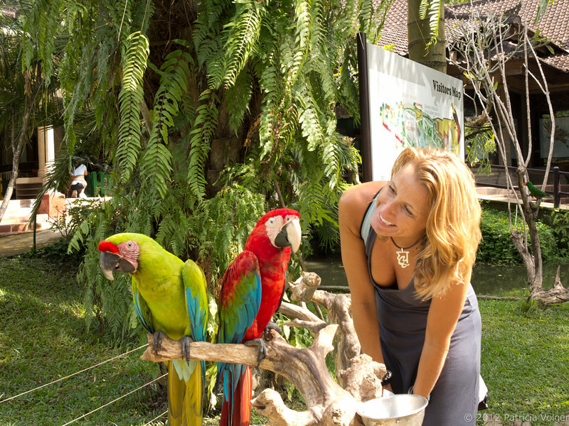 making new friends at the Bali Bird Park