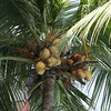 The maginficient palm