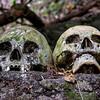 Bali Skulls 2