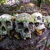 Bali Skulls