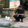 street dogs in Ubud, Bali