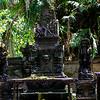 Macaque Throne (Macaca) 4