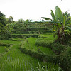 rice field walk, Lombok, Indonesia