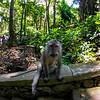 Curious Macaque (Macaca) 2