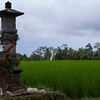 And more rice fields