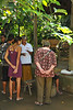 "Tourists at a garden for tea & coffee tasting. They also had a variety of herbs & spices for tasting/smelling.<br /> <br /> Kopi Luwak (pronounced [ˈkopi ˈluwaʔ]) or Civet coffee is coffee made from coffee berries which have been eaten by and passed through the digestive tract of the Asian Palm Civet (Paradoxurus hermaphroditus) and other related civet populations. What is amazing is that arguably, the most prized arabica coffee beans are not those growing on bushes but the ones found among the undergrowth, wedged in the excrement of wild palm civets. Its these beans that produce ""kopi luwak"", a chocolate flavored coffee that is one of the world's most prized and expensive brews.<br /> <br /> Disgusting as it sounds, the civets eat the berries, but the beans inside pass through their system undigested. This process takes place on the islands of Sumatra, Java, Bali and Sulawesi in the Indonesian Archipelago, in the Philippines (where the product is called Motit Coffee in the Cordillera, or Kape Alamid in Tagalog areas) and in East Timor (locally called kafé-laku). Local lore in Vietnam has given the name ""weasel coffee"" to civet coffee, in what is considered the closest recognizable translation to English.<br /> <br /> Kopi Luwak is the most expensive coffee in the world, selling for between $100 and $600 USD per pound, and is sold mainly in Japan and the United States by weight, and served in coffeehouses in Southeast Asia by the cup. It is increasingly becoming available elsewhere, though supplies are limited; only 1,000 pounds (450 kg) at most make it into the world market each year."