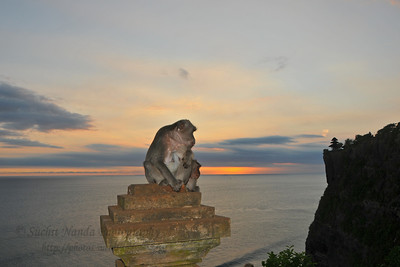 Pura Luhur Uluwatu, Bali.  Pura Luhur Uluwatu is one of Bali's kayangan jagat (directional temples) and guards Bali from evil spirits from the south-west. Major Hindu deities dwell in Uluwatu such as - Bhatara Rudra, God of the elements and of cosmic force majeures. Bali's most spectacular temples located high on a cliff top at the edge of a plateau 250 feet above the waves of the Indian Ocean. Uluwatu lies at the southern tip of Bali in Badung Regency. Dedicated to the spirits of the sea, the famous Pura Luhur Uluwatu temple is an architectural wonder in black coral rock, beautifully designed with spectacular views. This is a popular place to enjoy the sunset. Famous not only for its unique position, Uluwatu also boasts one of the oldest temples in Bali, Pura Uluwatu. Most of Bali's regencies have Pura Luhur (literally high temples or ascension temples) which become the focus for massive pilgrimages during three or five day odalan anniversaries. The photogenic Tanah Lot and the Bat Cave temple, Goa Lawah, are also Pura Luhur. Not all Pura Luhur are on the coast, however but all have inspiring locations, overlooking large bodies of water.  Uluwatu is a small village on the west coast, south of Jimbaran, but for most visitors it refers only to the famous temple of the same name and several kilometers further south at the coast. A taxi from Kuta to Uluwatu takes about 30 minutes up and down winding roads.  The temple is inhabited by large number of monkeys, who are extremely adept at snatching visitors' belonging, including bags, cameras and eyeglasses. One has to keep a very close grip on all your belongings. Anu carried a stick like some others and I carried my tripod. :) If you do have something taken, the monkeys can usually be induced to exchange it for some fruit. Needless to say, rewarding the monkeys like this only encourages them to steal more. Locals and even the temple priests will be happy to do the job for you, naturally in exchange for a tip. That's how