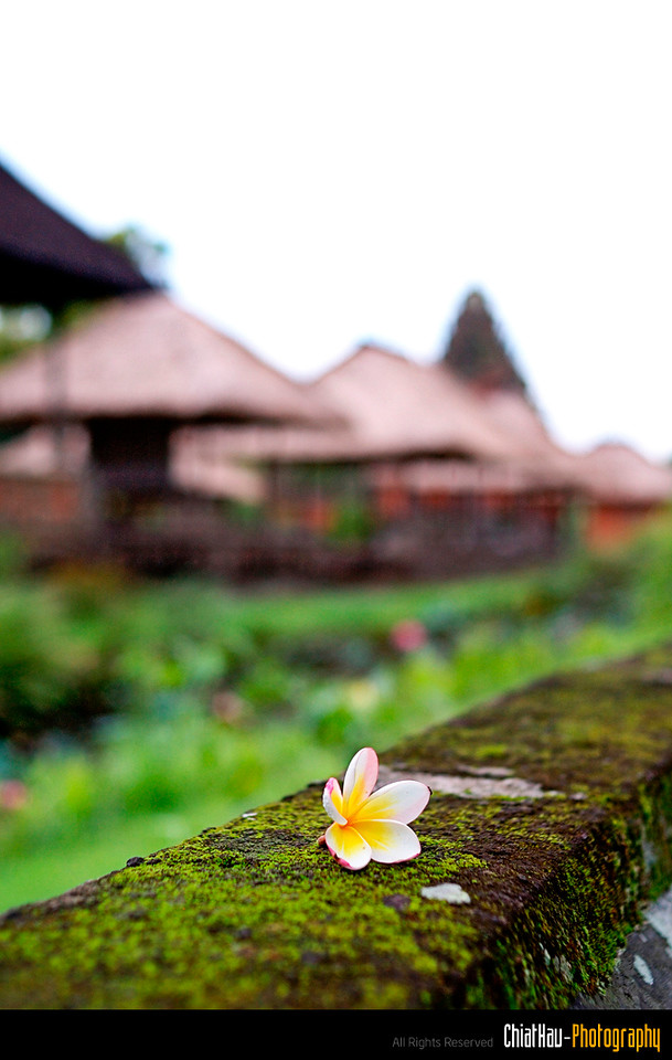 BALI is always a great place to rest and relax. :)