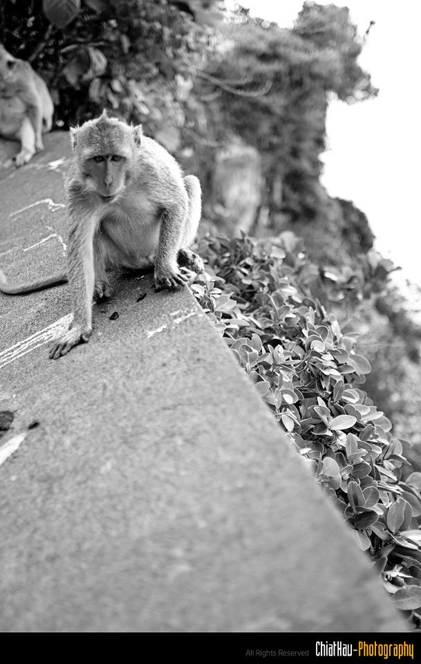 """Again... beware of monkey. :""""P hehe"""