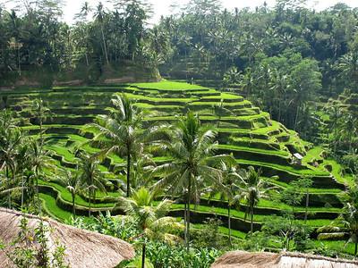Bali - Ubud - Road Trip