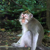 monkey jungle,Ubud