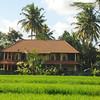 villa capung in Ubud