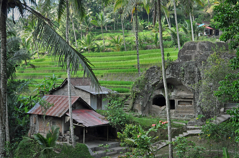 Temple+and+rice+terraces-739119624-O