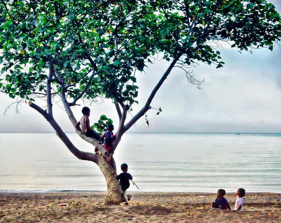 Children+in+Tree-Lovina-Bali+I-1180776885-O