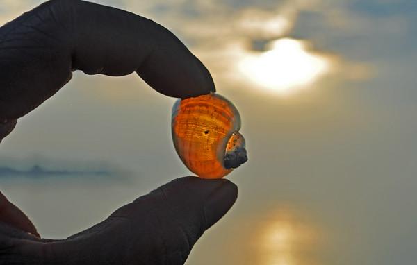 Found+shell-beach-Lovina-734622589-O
