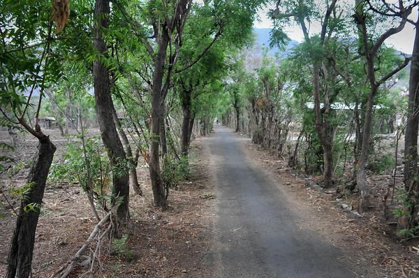 Morning+path+to+villiage-734681658-O