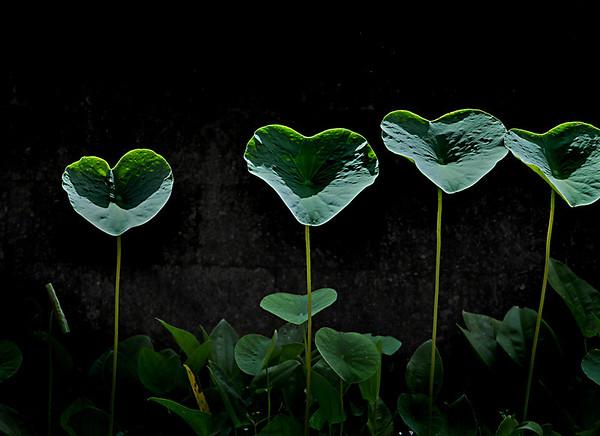 Arma poolside leaves