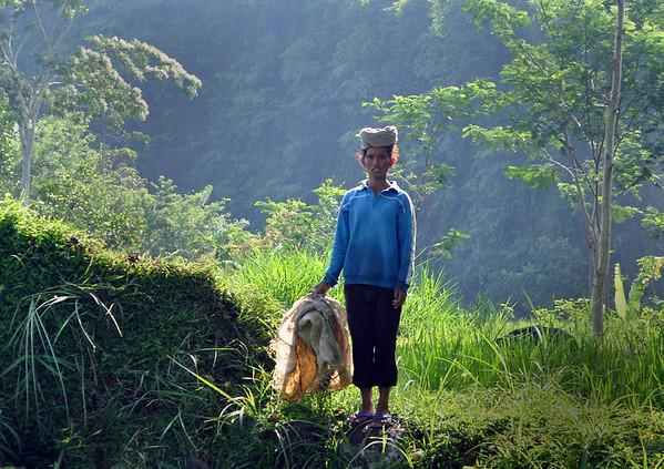 Balinese-boy in rice field