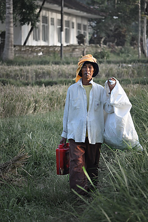 Working+in+the+rice+field-734297149-O