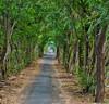 Main+Path+to+Town-Permuteran+B-1180874188-O