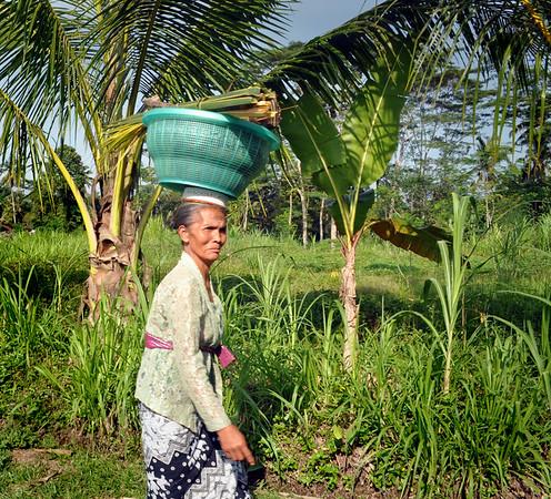 Balinese+balancing+act-734554854-O