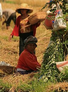 De rijstvelden van Iseh. Bali, Indonesië.