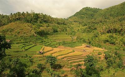 De rijstterrassen bij Tirtagganga, Bali, Indonesië.