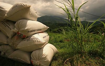 Zakken vol met rijst. Sidemen, Bali, Indonesië.