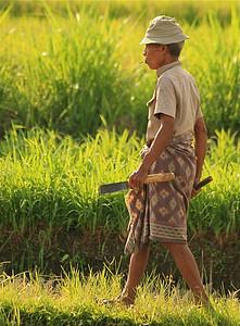 Balinees checkt de rijstsituatie. Amlapura, Bali, Indonesië.