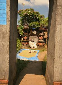 Hond waakt over de rijst. Ubud, Bali, Indonesië.