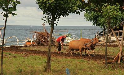 Boer ploegt voort. Amed, Bali, Indonesië.