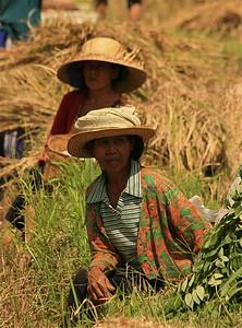 Even uitrusten in de rijstvelden van Iseh. Bali, Indonesië.