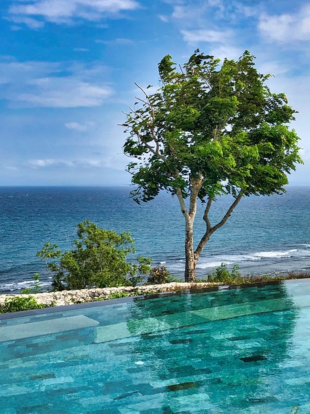 Bali Pool  The presence of the tree