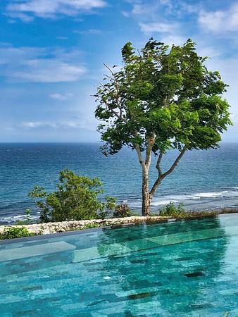 Bali Pool  The presence of the tree