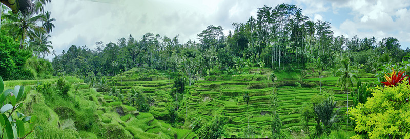Rice terraces Ubud Bali Indonesia - 19 Apr 2006