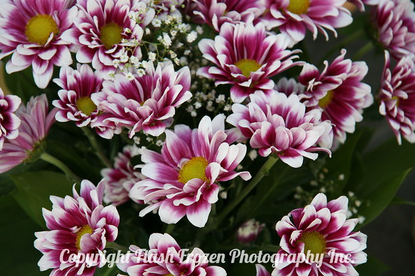 Talinn Flower Market