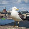 Watchbird over the harbor.