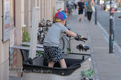 Young boy wearing propeller hat in bicyle basket in Copenhagen, Denmark.
