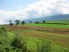 Farms near Port Royal.