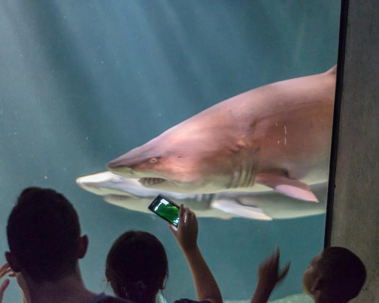 Natilonal Aquarium in Baltimore.