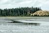 Oregon Coastal Sand Dunes