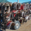 Some of the 400 saddles at Warner stables.