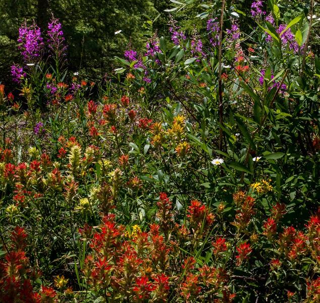 Flowers along the roadside as you approach Moraine Lake.