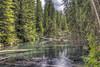 Enchanted Creek