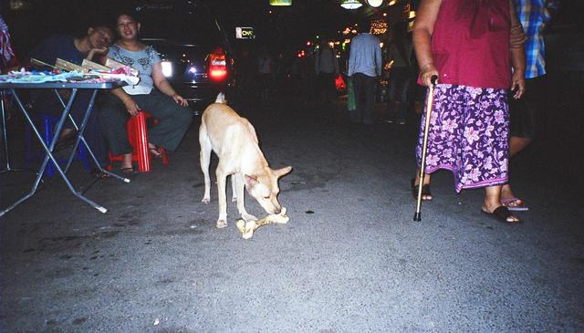 Dog with HUGE bone Rambutri Road  (Ko San)