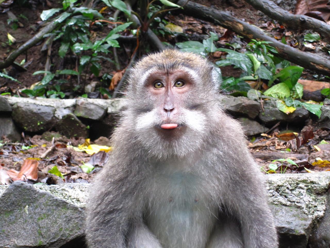 No he didn't!  Cheeky monkey!