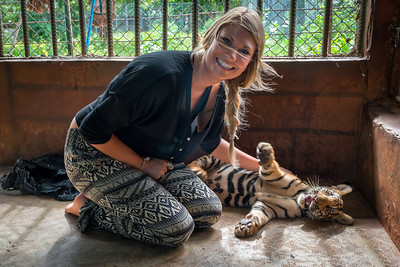 My daughter gets to know the tiger cubs