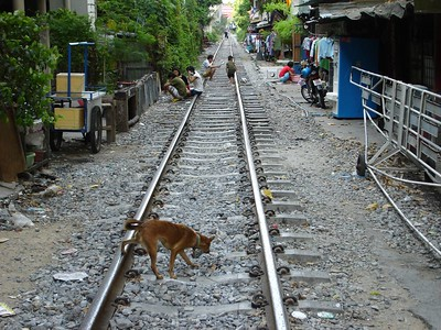 Dogs and people on the railroad tracks. We must be in a third world country.