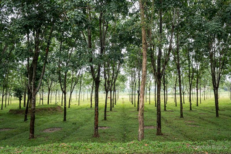 Srimangal, Bangladesh