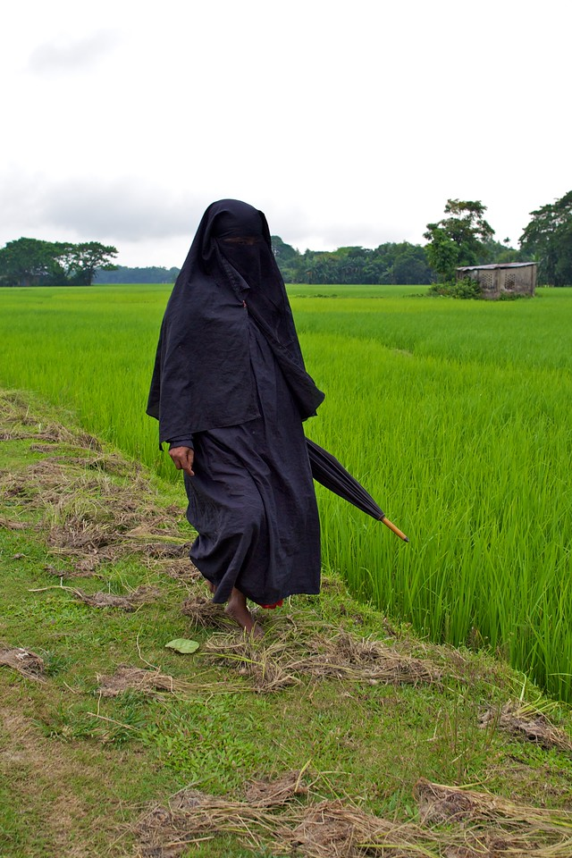 Muslim woman in burka walking along rice fields.